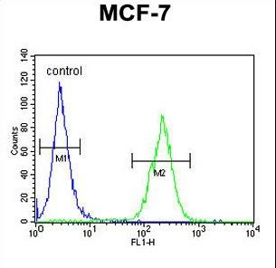 DNAJA1 / HDJ2 Antibody - DNAJA1 Antibody flow cytometry of MCF-7 cells (right histogram) compared to a negative control cell (left histogram). FITC-conjugated goat-anti-rabbit secondary antibodies were used for the analysis.