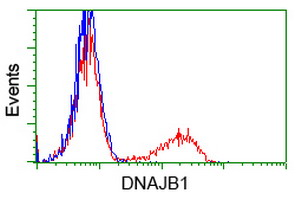 DNAJB1 / Hsp40 Antibody - HEK293T cells transfected with either overexpress plasmid (Red) or empty vector control plasmid (Blue) were immunostained by anti-DNAJB1 antibody, and then analyzed by flow cytometry.