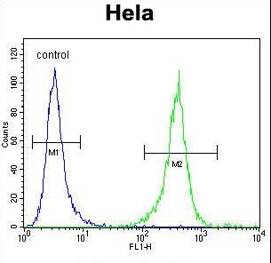 DNAJB6 Antibody - DNAJB6 Antibody flow cytometry of HeLa cells (right histogram) compared to a negative control cell (left histogram). FITC-conjugated goat-anti-rabbit secondary antibodies were used for the analysis.