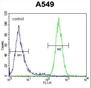 DSC92 / NGRN Antibody - NGRN Antibody flow cytometry of A549 cells (right histogram) compared to a negative control cell (left histogram). FITC-conjugated goat-anti-rabbit secondary antibodies were used for the analysis.