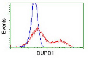 DUPD1 Antibody - HEK293T cells transfected with either overexpress plasmid (Red) or empty vector control plasmid (Blue) were immunostained by anti-DUPD1 antibody, and then analyzed by flow cytometry.
