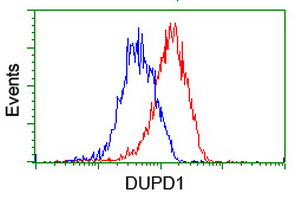 DUPD1 Antibody - Flow cytometry of HeLa cells, using anti-DUPD1 antibody (Red), compared to a nonspecific negative control antibody (Blue).