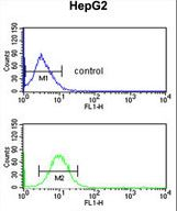 PECI Antibody flow cytometry of HepG2 cells (bottom histogram) compared to a negative control cell (top histogram). FITC-conjugated goat-anti-rabbit secondary antibodies were used for the analysis.