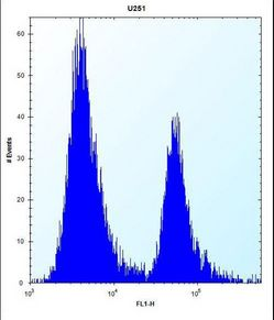 PEG10 Antibody flow cytometry of U251 cells (right histogram) compared to a negative control cell (left histogram). FITC-conjugated goat-anti-rabbit secondary antibodies were used for the analysis.