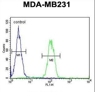 EGLN2 / PHD1 Antibody - EGLN2 Antibody flow cytometry of MDA-MB231 cells (right histogram) compared to a negative control cell (left histogram). FITC-conjugated goat-anti-rabbit secondary antibodies were used for the analysis.