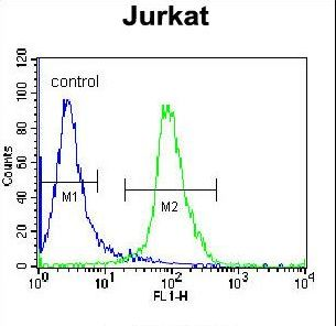 ELMO2 Antibody - ELMO2 Antibody flow cytometry of Jurkat cells (right histogram) compared to a negative control cell (left histogram). FITC-conjugated donkey-anti-rabbit secondary antibodies were used for the analysis.