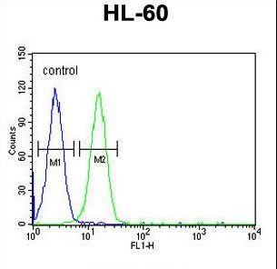 EMX2 Antibody - EMX2 Antibody flow cytometry of HL-60 cells (right histogram) compared to a negative control cell (left histogram). FITC-conjugated goat-anti-rabbit secondary antibodies were used for the analysis.