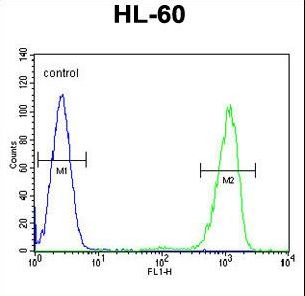 ENTPD3 Antibody - ENTPD3 Antibody flow cytometry of HL-60 cells (right histogram) compared to a negative control cell (left histogram). FITC-conjugated goat-anti-rabbit secondary antibodies were used for the analysis.