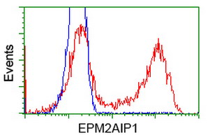 HEK293T cells transfected with either overexpress plasmid (Red) or empty vector control plasmid (Blue) were immunostained by anti-EPM2AIP1 antibody, and then analyzed by flow cytometry.