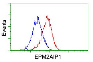 EPM2AIP1 Antibody - Flow cytometry of HeLa cells, using anti-EPM2AIP1 antibody (Red), compared to a nonspecific negative control antibody (Blue).