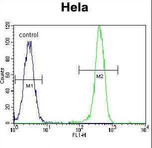 EPOR / EPO Receptor Antibody - EPOR Antibody flow cytometry of HeLa cells (right histogram) compared to a negative control cell (left histogram). FITC-conjugated goat-anti-rabbit secondary antibodies were used for the analysis.