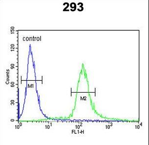 EPS8L3 Antibody - EPS8L3 Antibody flow cytometry of 293 cells (right histogram) compared to a negative control cell (left histogram). FITC-conjugated goat-anti-rabbit secondary antibodies were used for the analysis.