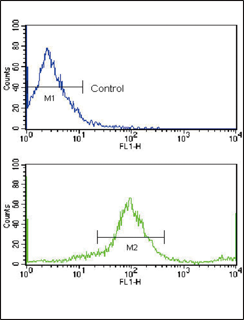Flow cytometric of MCF-7 cells using HER2/ErbB2 Antibody (bottom histogram) compared to a negative control cell (top histogram). FITC-conjugated goat-anti-rabbit secondary antibodies were used for the analysis.