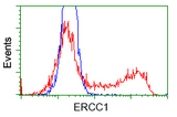 HEK293T cells transfected with either pCMV6-ENTRY ERCC1 (Red) or empty vector control plasmid (Blue) were immunostained with anti-ERCC1 mouse monoclonal, and then analyzed by flow cytometry.