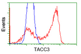 HEK293T cells transfected with either pCMV6-ENTRY TACC3 (Red) or empty vector control plasmid (Blue) were immunostained with anti-TACC3 mouse monoclonal, and then analyzed by flow cytometry.