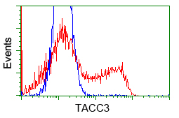 HEK293T cells transfected with either overexpress plasmid (Red) or empty vector control plasmid (Blue) were immunostained by anti-TACC3 antibody, and then analyzed by flow cytometry.