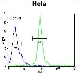 ESCO2 Antibody - ESCO2 Antibody flow cytometry of HeLa cells (right histogram) compared to a negative control cell (left histogram). FITC-conjugated goat-anti-rabbit secondary antibodies were used for the analysis.