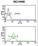 ESRRB / ERR Beta Antibody - ESRRB Antibody flow cytometry of NCI-H460 cells (bottom histogram) compared to a negative control cell (top histogram). FITC-conjugated goat-anti-rabbit secondary antibodies were used for the analysis.