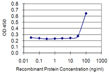 ETV3 Antibody - Detection limit for recombinant GST tagged ETV3 is 10 ng/ml as a capture antibody.