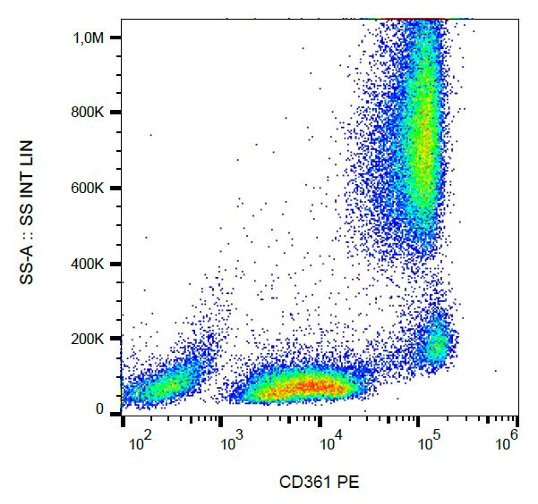 Surface staining of human peripheral blood using anti-CD361 antibody (MEM-216) PE.