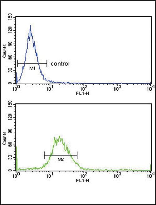 EXT2 Antibody flow cytometry of HeLa cells (bottom histogram) compared to a negative control cell (top histogram). FITC-conjugated goat-anti-rabbit secondary antibodies were used for the analysis.
