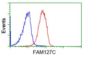 FAM127C Antibody - Flow cytometry of Jurkat cells, using anti-FAM127C antibody (Red), compared to a nonspecific negative control antibody (Blue).