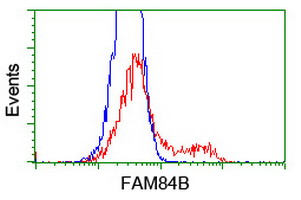 FAM84B Antibody - HEK293T cells transfected with either overexpress plasmid (Red) or empty vector control plasmid (Blue) were immunostained by anti-FAM84B antibody, and then analyzed by flow cytometry.