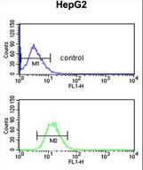 FBLN4 / EFEMP2 Antibody - EFEMP2 Antibody flow cytometry of HepG2 cells (bottom histogram) compared to a negative control cell (top histogram). FITC-conjugated goat-anti-rabbit secondary antibodies were used for the analysis.