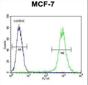 FGF9 Antibody flow cytometry of MCF-7 cells (right histogram) compared to a negative control cell (left histogram). FITC-conjugated goat-anti-rabbit secondary antibodies were used for the analysis.