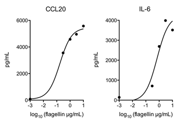 Flagellin (AG-40B-0025) activates TLR5 in vivo. Method: Mice WT are injected i.v. with indicated doses of Flagellin (Prod. No. AG-40B-0025). After 2 hours, levels of CCL20 and IL-6 in the serum were measured by ELISA. As a control, mice TLR5 -/- have been injected i.v. with 10ug of Flagellin (Prod. No. AG-40B-0025), but no expression of CCL20 and IL-6 could be observed (not shown).