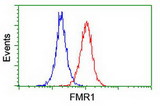 Flow cytometry of Jurkat cells, using anti-FMR1 antibody (Red), compared to a nonspecific negative control antibody (Blue).