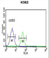 PSMAL Antibody flow cytometry of K562 cells (right histogram) compared to a negative control cell (left histogram). FITC-conjugated goat-anti-rabbit secondary antibodies were used for the analysis.