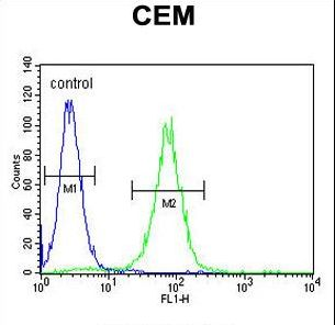 FOLH1B Antibody - PSMAL Antibody flow cytometry of CEM cells (right histogram) compared to a negative control cell (left histogram). FITC-conjugated goat-anti-rabbit secondary antibodies were used for the analysis.