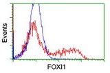 HEK293T cells transfected with either overexpress plasmid (Red) or empty vector control plasmid (Blue) were immunostained by anti-FOXI1 antibody, and then analyzed by flow cytometry.