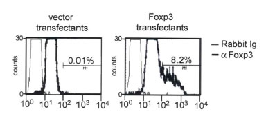 Transfectants from A were permeabilized and stained with anti-Foxp3 antibody and FITC-conjugated secondary antibody. Cells were analyzed by flow cytometry. Percentage of positively stained cells are shown.  This image was taken for the unconjugated form of this product. Other forms have not been tested.