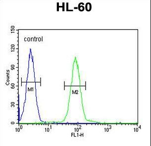 FRA9F Antibody - PGAP2 Antibody flow cytometry of HL-60 cells (right histogram) compared to a negative control cell (left histogram). FITC-conjugated goat-anti-rabbit secondary antibodies were used for the analysis.