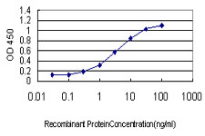 Detection limit for recombinant GST tagged FXR1 is approximately 0.3 ng/ml as a capture antibody.