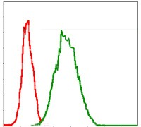 G6PDH Antibody - Flow Cytometry: Glucose 6 Phosphate Dehydrogenase Antibody (2H7) - Flow cytometric analysis of Jurkat cells using Glucose 6 Phosphate Dehydrogenase mouse mAb (green) and negative control (red).