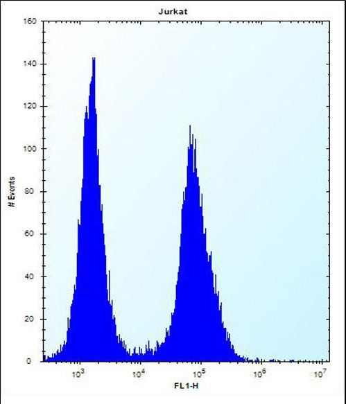LGALS4 Antibody flow cytometry of Jurkat cells (right histogram) compared to a negative control cell (left histogram). FITC-conjugated donkey-anti-rabbit secondary antibodies were used for the analysis.