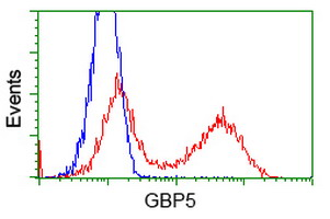 GBP5 Antibody - HEK293T cells transfected with either overexpress plasmid (Red) or empty vector control plasmid (Blue) were immunostained by anti-GBP5 antibody, and then analyzed by flow cytometry.