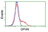 HEK293T cells transfected with either overexpress plasmid (Red) or empty vector control plasmid (Blue) were immunostained by anti-GPHN antibody, and then analyzed by flow cytometry.