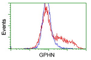 Gephyrin Antibody - HEK293T cells transfected with either overexpress plasmid (Red) or empty vector control plasmid (Blue) were immunostained by anti-GPHN antibody, and then analyzed by flow cytometry.