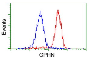 Gephyrin Antibody - Flow cytometry of HeLa cells, using anti-GPHN antibody (Red), compared to a nonspecific negative control antibody (Blue).