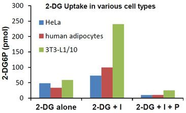 Glucose Assay Kit - 2-DG uptake in 3T3-L1, human adipocyte and Hela cells. To scale on the same graph, data from 3T3-L1 cells is plotted at 10% of true value. 2-DG = 2-deoxyglucose, I = Insulin; P = Phloretin.