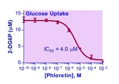 Glucose transport inhibition curve with phloretin. PANC-1 cells were seeded at 10,000 cells per well.