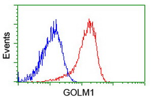 Flow cytometry of HeLa cells, using anti-GOLM1 antibody (Red), compared to a nonspecific negative control antibody (Blue).