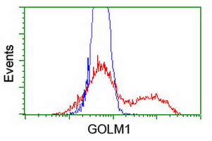 GOLM1 / GP73 / GOLPH2 Antibody - HEK293T cells transfected with either overexpress plasmid (Red) or empty vector control plasmid (Blue) were immunostained by anti-GOLM1 antibody, and then analyzed by flow cytometry.