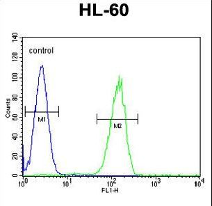 GPR142 Antibody flow cytometry of HL-60 cells (right histogram) compared to a negative control cell (left histogram). FITC-conjugated goat-anti-rabbit secondary antibodies were used for the analysis.