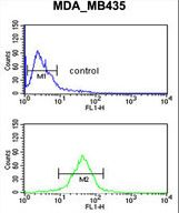 GPR17 Antibody - GPR17 Antibody flow cytometry of MDA-MB435 cells (bottom histogram) compared to a negative control cell (top histogram). FITC-conjugated goat-anti-rabbit secondary antibodies were used for the analysis.