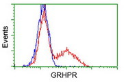 HEK293T cells transfected with either overexpress plasmid (Red) or empty vector control plasmid (Blue) were immunostained by anti-GRHPR antibody, and then analyzed by flow cytometry.